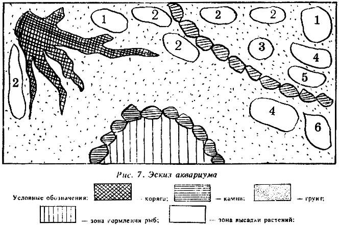Эскиз аквариума: (1- нимфея;